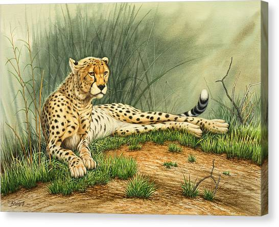 Cheetahs Canvas Print - Alert Repose  - Cheetah by Paul Krapf