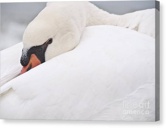 Alert Rest Canvas Print
