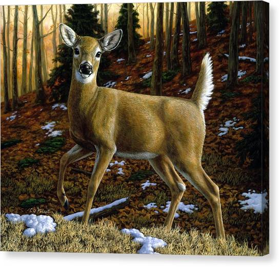 White-tailed Deer Canvas Print - Whitetail Deer - Alerted by Crista Forest