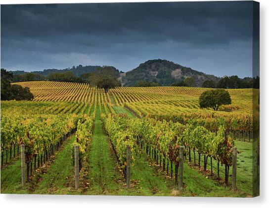 Sonoma Valley Canvas Print - Alexander Valley by Rmb Images / Photography By Robert Bowman