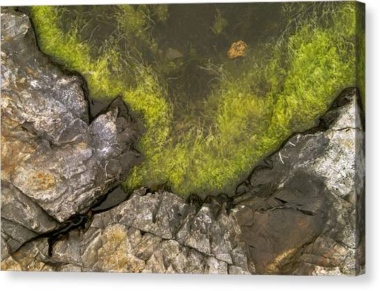 Algae Pool Abstract Photo Canvas Print by Peter J Sucy