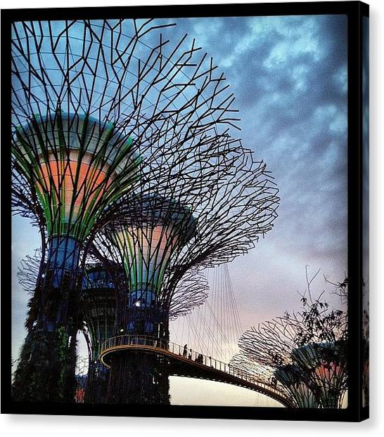 Grove Canvas Print - Evening Supertrees And Skyway by Jeff Leong