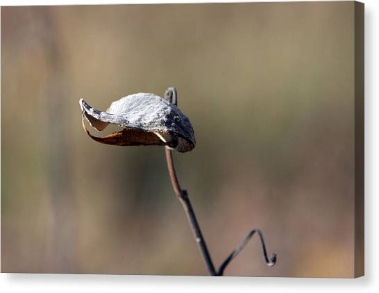 Alien Seed Pod? Canvas Print by Kevin Snider