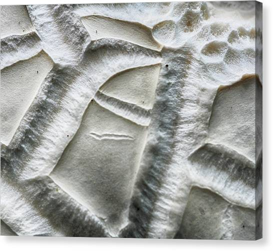 Alien Surface Canvas Print