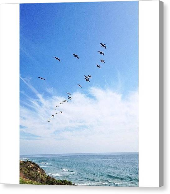 Ucsb Canvas Print - Alive And Living, Happy And Free ☀️ by Mckenzie Kane