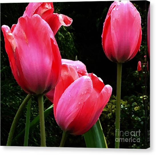 All About Tulips Victoria Canvas Print