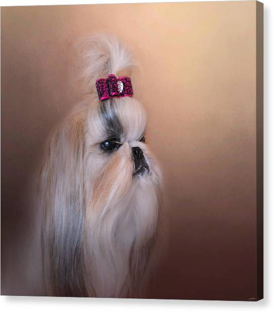 Shih Tzus Canvas Print - All Dolled Up - Shih Tzu by Jai Johnson