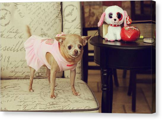 Chihuahuas Canvas Print - All Dressed Up by Laurie Search