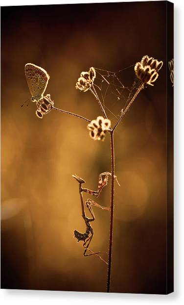 Bug Canvas Print - All I Want Is You by Fabien Bravin