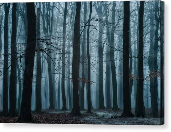 Foggy Forests Canvas Print - All Of Us by Ellen Borggreve
