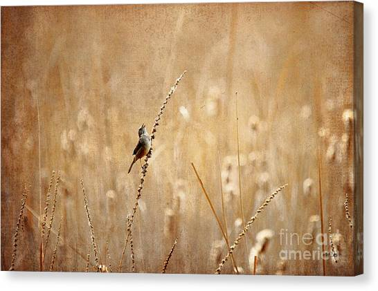 Wrens Canvas Print - All Rejoicing by Lois Bryan
