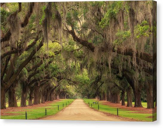 Alley Of The Oaks Canvas Print