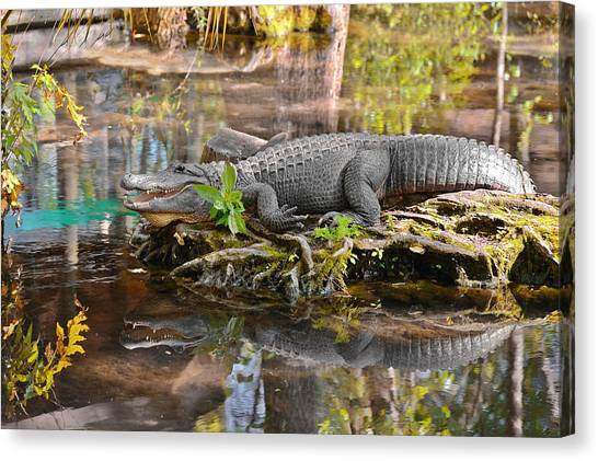 Prehistoric Canvas Print - Alligator Mississippiensis by Christine Till