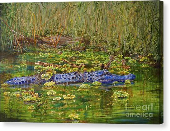 Alligator Pod Canvas Print