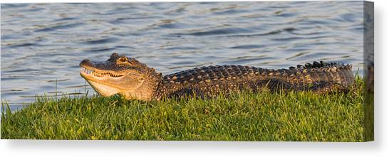Alligator Smile Canvas Print