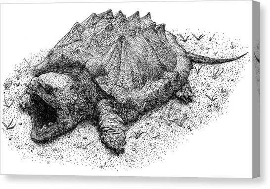 Snapping Turtles Canvas Print - Alligator Snapping Turtle by Roger Hall