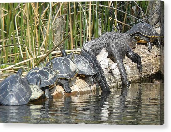 Alligator Turtle Train Canvas Print by Krista Keck