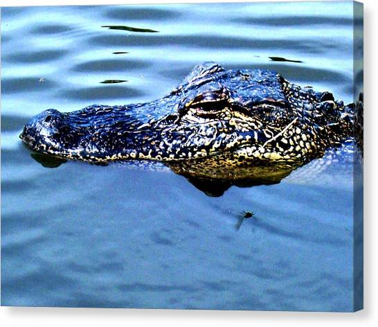 Alligator With Spider Canvas Print