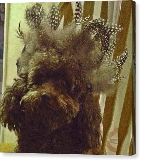 Poodles Canvas Print - #allshots_ #toypoodle by Elizabeth Maldonado