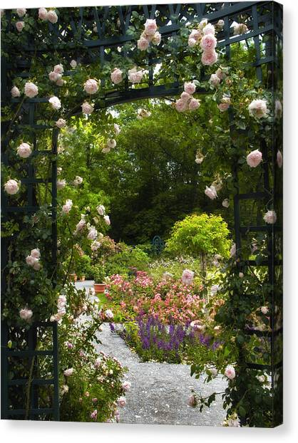 Arbor Canvas Print - Allure Of Roses by Jessica Jenney