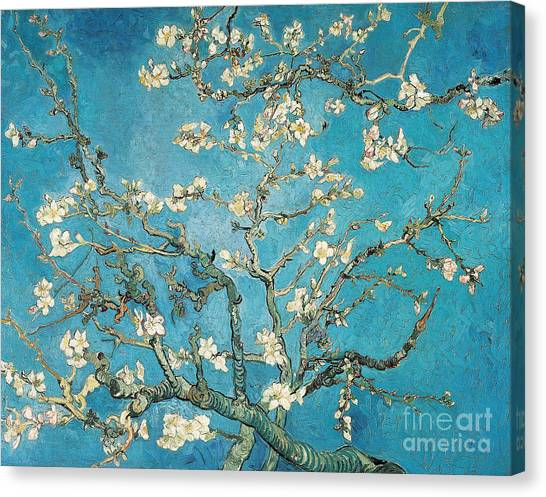 Bush Canvas Print - Almond Branches In Bloom by Vincent van Gogh