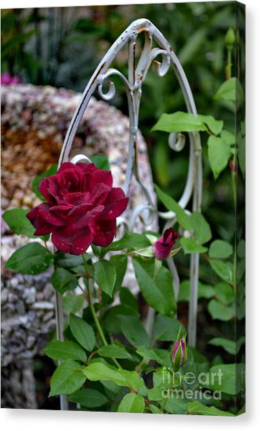 Almost A Perfect Rose Canvas Print