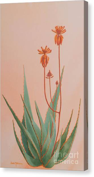 Aloe Family Canvas Print