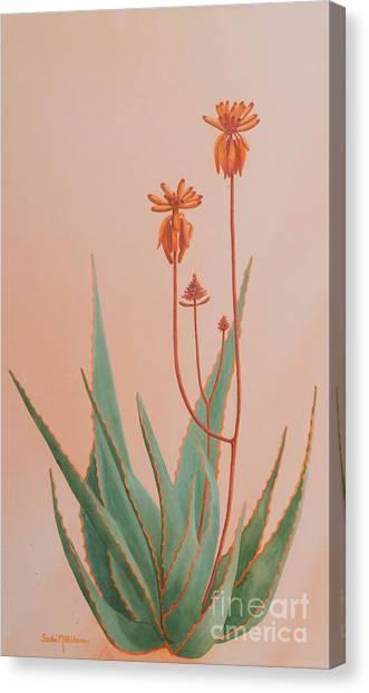 Aloe Family Canvas Print