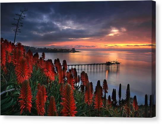Aloes Last Light Canvas Print