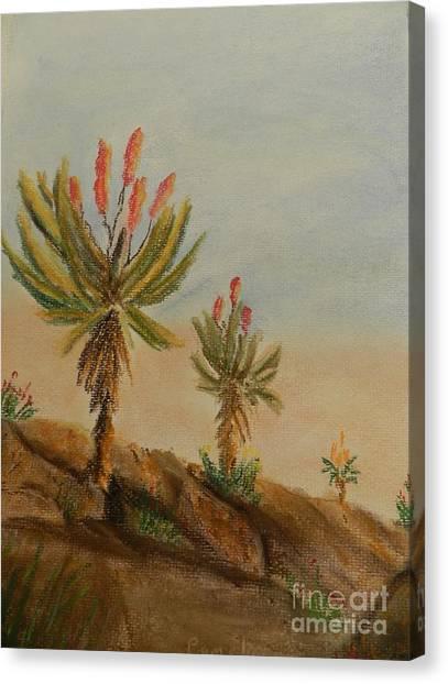 Aloes Canvas Print