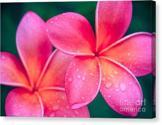 Aloha Hawaii Kalama O Nei Pink Tropical Plumeria Canvas Print