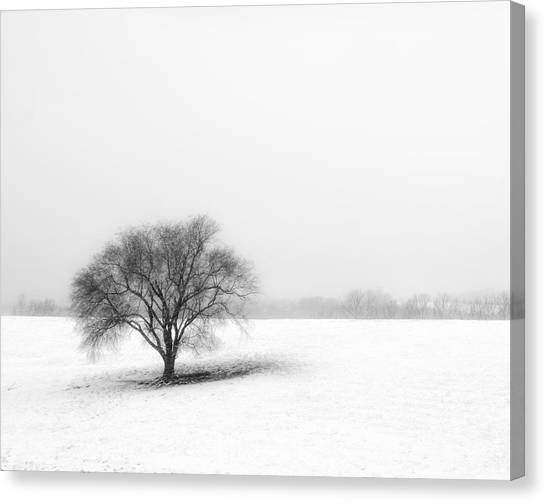 Trees In Snow Canvas Print - Alone by Don Spenner