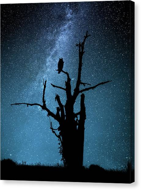 Alone In The Dark Canvas Print by Manu Allicot