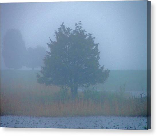 Alone In The Fog Canvas Print by Nancy Landry