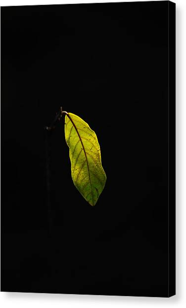 Alone In The Forest Canvas Print by James Hammen