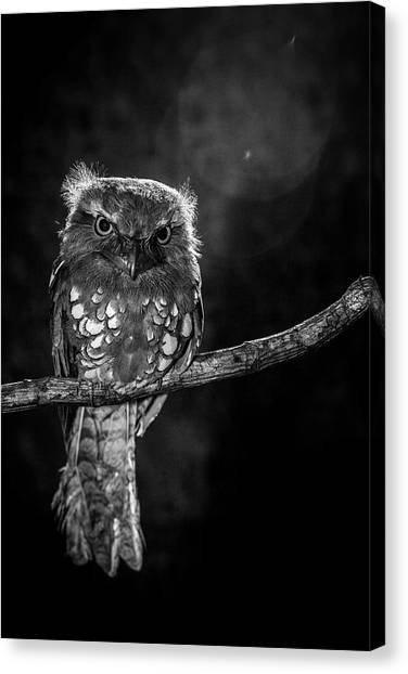 Cute Bird Canvas Print - Alone In The Night by