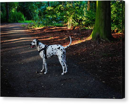 Dalmations Canvas Print - Alone In The Woods. Kokkie. Dalmatian Dog by Jenny Rainbow