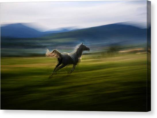 Horse Galloping Canvas Print - Alone by Milan Malovrh
