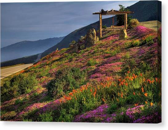 Phlox Canvas Print - Along The Pacific Highway by Donna Kennedy