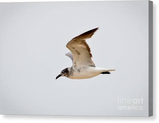 Alongside - Seagull Canvas Print