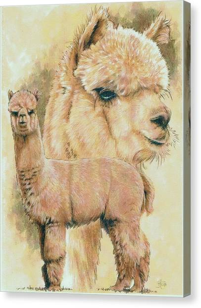 Canvas Print - Alpaca by Barbara Keith