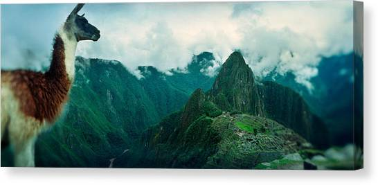 Peruvian Canvas Print - Alpaca Vicugna Pacos On A Mountain by Panoramic Images