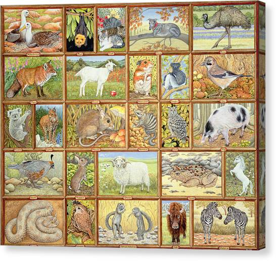 Wrens Canvas Print - Alphabetical Animals by Ditz