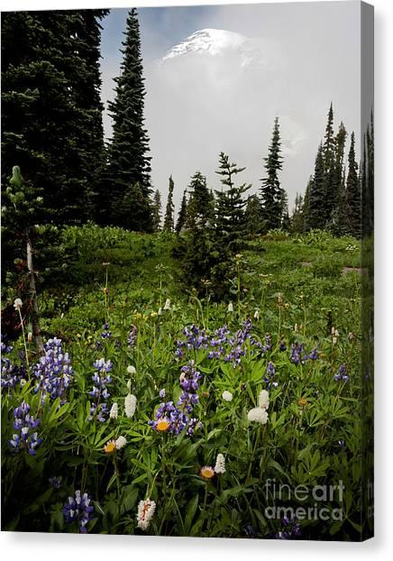 Alpine Beauty Canvas Print