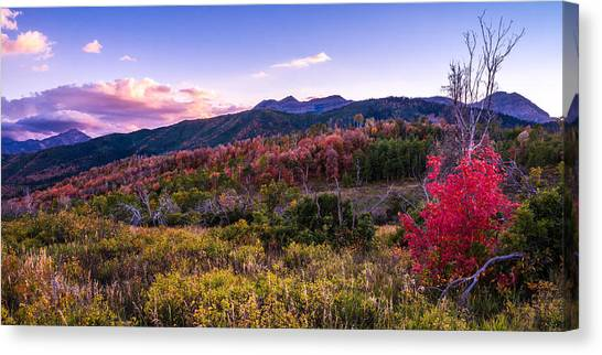 Cloud Forests Canvas Print - Alpine Fall by Chad Dutson