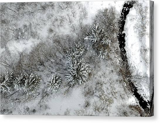 Alpine Snow Trees Canvas Print by Stephen Richards