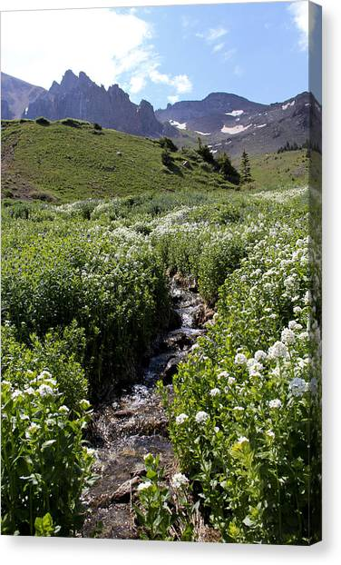 Alpine Stream Canvas Print