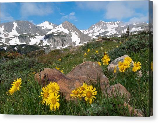 Alpine Sunflower Mountain Landscape Canvas Print