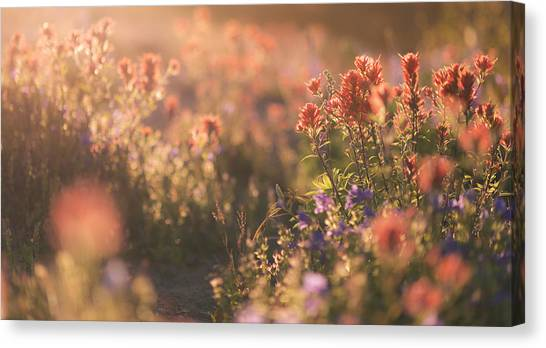 Alpine Wildflowers At Mt. St. Helens Canvas Print