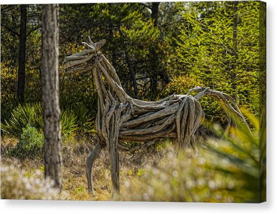 Alys Beach Driftwood Horse Canvas Print by Frank Feliciano